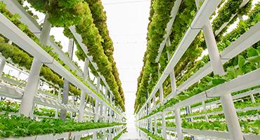 Vertical_farming_thumb